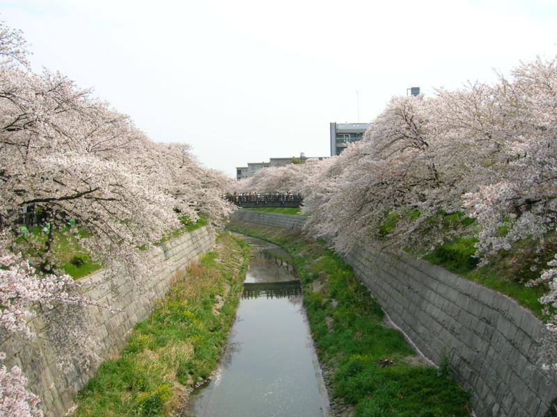 Yamazaki-River